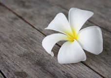 Tropical flowers frangipani Stock Photo