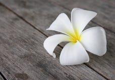 Tropical Flowers Frangipani