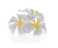 Tropical flowers frangipani (plumeria) Stock Images