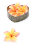 Tropical flowers frangipani, plumeria Royalty Free Stock Photo
