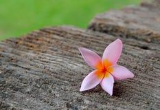 Tropical flowers frangipani on wood Royalty Free Stock Photos