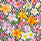 Tropical Flowers Geometric Background Royalty Free Stock Photos