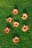 Tropical flowers on green grass Royalty Free Stock Image