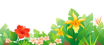 Tropical flowers. Illustration of beautiful tropical flowers Stock Images