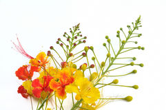 Tropical flowers isolated Royalty Free Stock Photos