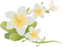 Tropical flowers isolated on white. Tropica flowers and leaves isolated on white Stock Photos