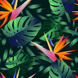 Tropical flowers, jungle leaves, bird of paradise flower. Beautiful seamless  floral pattern background, exotic print Stock Photos