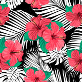Tropical flowers and leaves on background. Stock Image