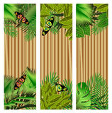 Tropical flowers and leaves and beautiful butterfly over wood, b Royalty Free Stock Photography
