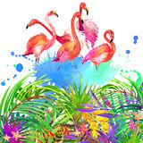 Tropical flowers, leaves and bird. Watercolor summer nature background Royalty Free Stock Images