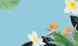 Orange hibiscus flower. Tropical flowers and leaves - borders of fresh frangipani and strelizia flowers and exotic palm leaves on blue background banner Royalty Free Stock Photography