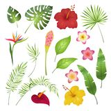 Tropical flowers and leaves. Caribbean tropical flower leaf hibiscus orchid hawaii exotic, garden jungle summer image royalty free illustration