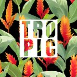 Tropical Flowers and Leaves Exotic Background. Vector Banner. T-shirt Graphic Design Royalty Free Stock Photography