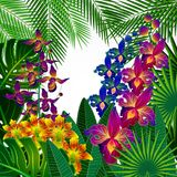Tropical flowers and leaves. Floral design background. Vector stock illustration