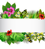 Tropical flowers and leaves over white Royalty Free Stock Image