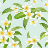 Tropical Flowers and Leaves Pattern. Seamless Background Royalty Free Stock Photos