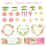 Tropical Flowers and Leaves Set. Exotic Plumeria Flower Royalty Free Stock Images