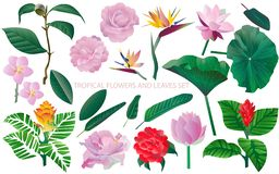 Tropical flowers and leaves set. White background. Seamless patt vector illustration