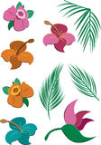 Tropical Flowers and Leaves Royalty Free Stock Photography