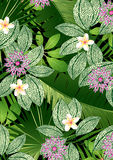Tropical flowers and leaves. Royalty Free Stock Images