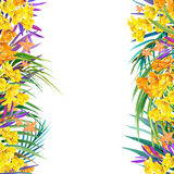 Tropical flowers, leaves. watercolor illustration Royalty Free Stock Image