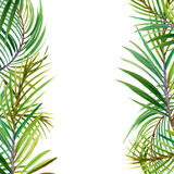 Tropical flowers, leaves. watercolor illustration Royalty Free Stock Images