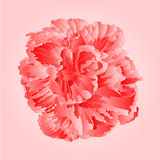 Tropical flowers pink  hibiscus vector Royalty Free Stock Photos