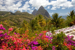 Tropical flowers, Piton mountains on Caribbean island of St Lucia Stock Photos