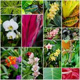 Tropical flowers and plants. Collage of tropical flowers and plants Stock Images