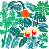 Tropical flowers and plants set. Vector set of graphic elements with leafs inspired by tropical nature, plants like palm trees, ferns in multiple green colors Royalty Free Stock Images