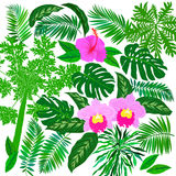 Tropical flowers and plants set. Vector set of graphic elements with leafs inspired by tropical nature, plants like palm trees, ferns in multiple green colors Stock Images