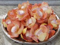 Tropical flowers on a platter - an offering to the Buddha, Sri Lanka Stock Photos