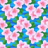 Tropical flowers plumeria Stock Photo
