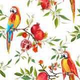 Tropical Flowers, Pomegranates and Parrot Birds Background Stock Photo