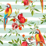Tropical Flowers, Pomegranates and Parrot Birds Background Stock Image
