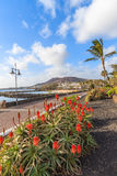 Tropical flowers on promenade in Playa Blanca Royalty Free Stock Photography