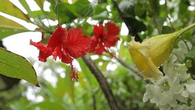 Tropical flowers after rain. Red, yellow and white wet flowers stock footage