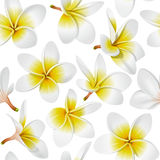 Tropical flowers seamless pattern Royalty Free Stock Image