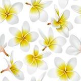 Tropical flowers seamless pattern. Frangipani (Plumeria) tropical flowers. Seamless pattern background. Vector illustration Royalty Free Stock Image