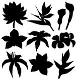 Tropical flowers silhouettes set - Water lily, orchid, clematis, plumeria, frangipani, bird of paradise and hibiscus. Vector illustration Stock Images