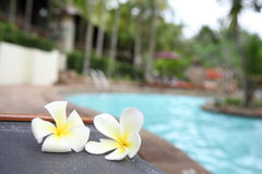 Tropical flowers Swimming pool Stock Images