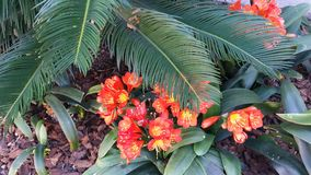 Tropical Flowers. Took this picture at the beach Stock Photography