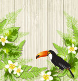 Tropical flowers and toucan Royalty Free Stock Images