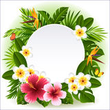 Tropical flowers. Vector illustration - tropical flowers and plants Royalty Free Stock Images