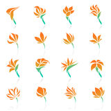 Tropical flowers. Vector logo template set. Royalty Free Stock Image