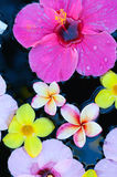 Tropical flowers in water Royalty Free Stock Image