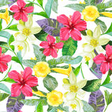Tropical flowers on a white background. Royalty Free Stock Photos