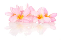 Tropical Flowers on white with reflection Royalty Free Stock Images