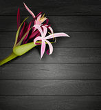 Tropical flowers on a wooden background Stock Images