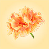 Tropical flowers yellow hibiscus vector Royalty Free Stock Photos